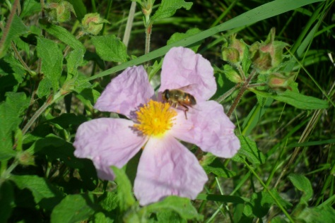 beautybee